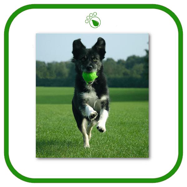 Dog Walking Services Sutton