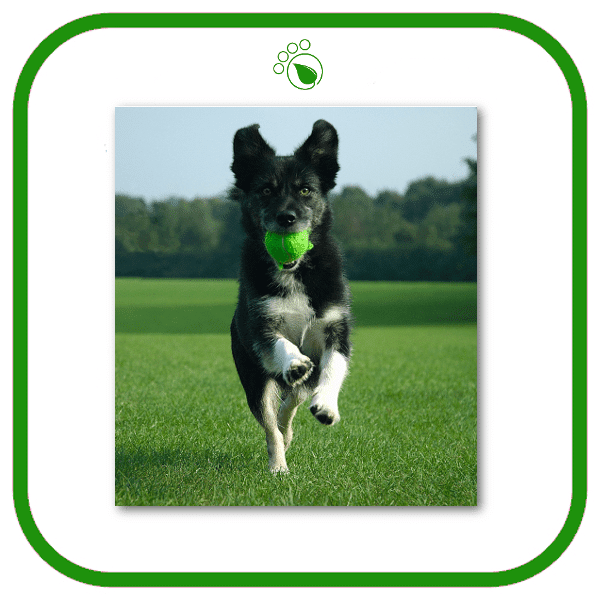 Dog Walking Services Sutton