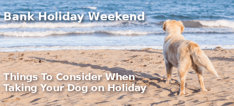 Bank Holiday Weekend – Things To Consider When Taking Your Dog on Holiday