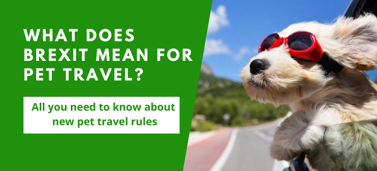 What does Brexit mean for pet travel?