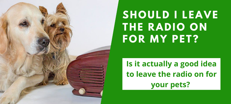 Should I leave the radio on for my pet?
