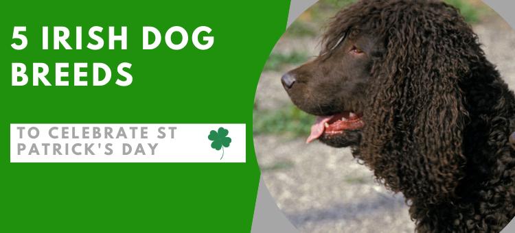 5 Irish Dog Breeds To Celebrate St Patrick's Day