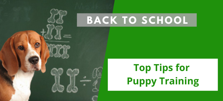 Back To School: Top Tips for Puppy Training