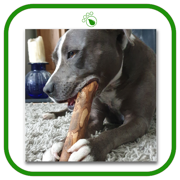 Natural Olive Wood Chew