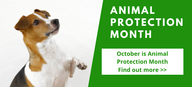Animal Protection Month